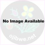 Ojibwe Text Anthology